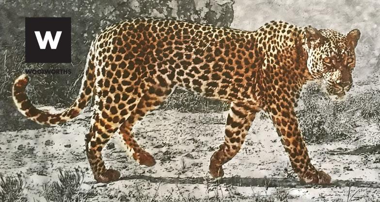 leopard-2-banner